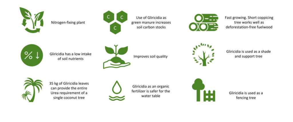 GLIRICIDIA BENEFITS